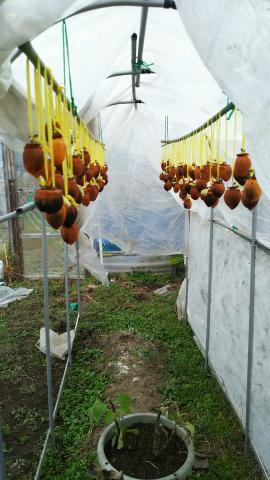 干し柿が もうすぐ